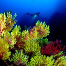 Zonas de inmersión
