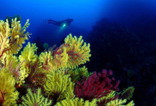 Especialidad · Profunda · Deep Diver