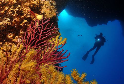 Update · Adventure Diver a Advanced Open Water Diver