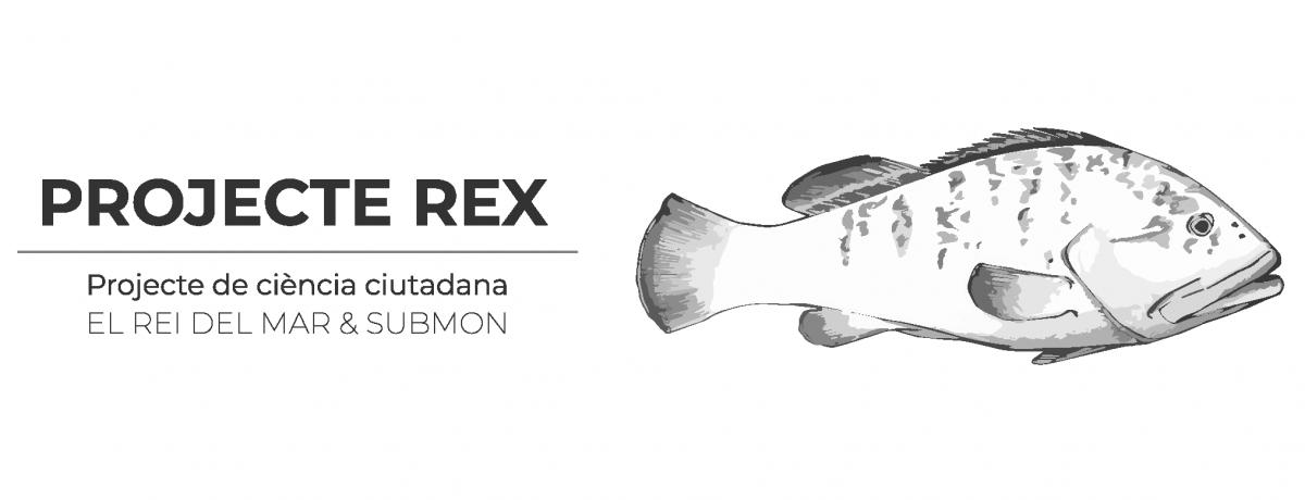Rex Project